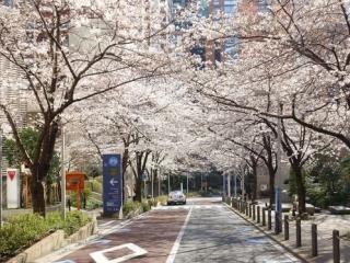 櫻坂46の由来,六本木さくら坂通りの画像