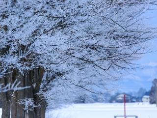 冬の寒さの画像